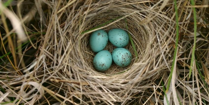 Bird Nest Fire Hazard