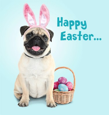 Pronto Hire - Easter Pug